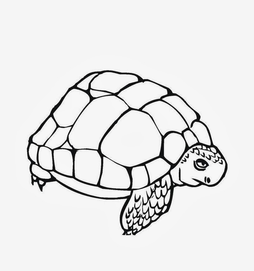 Best Turtle Colour Derawing HD Wallpaper Free