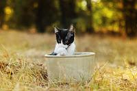 Cat in the Pot 3
