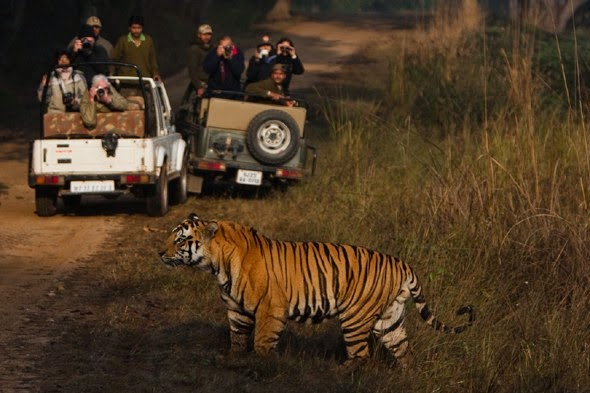 Night Safari at Pench National Park