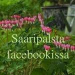 Saaripalsta facebookissa