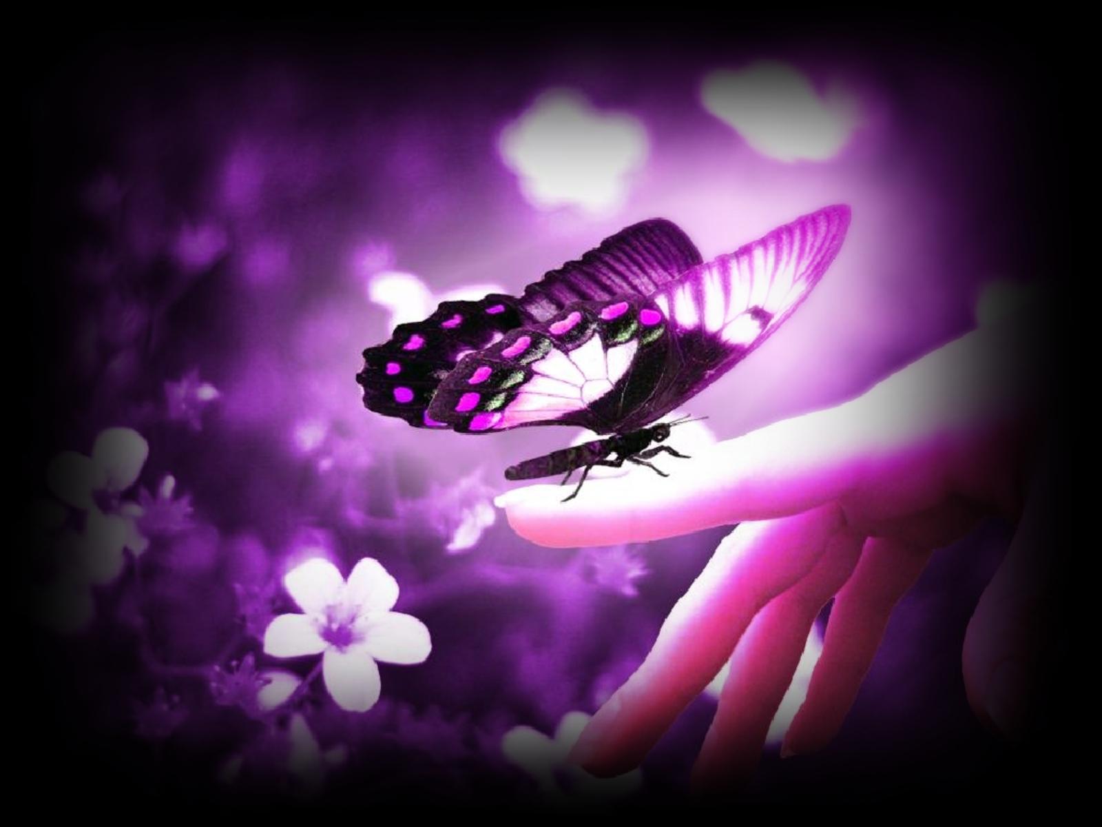 la lengua de las mariposas - YouTube