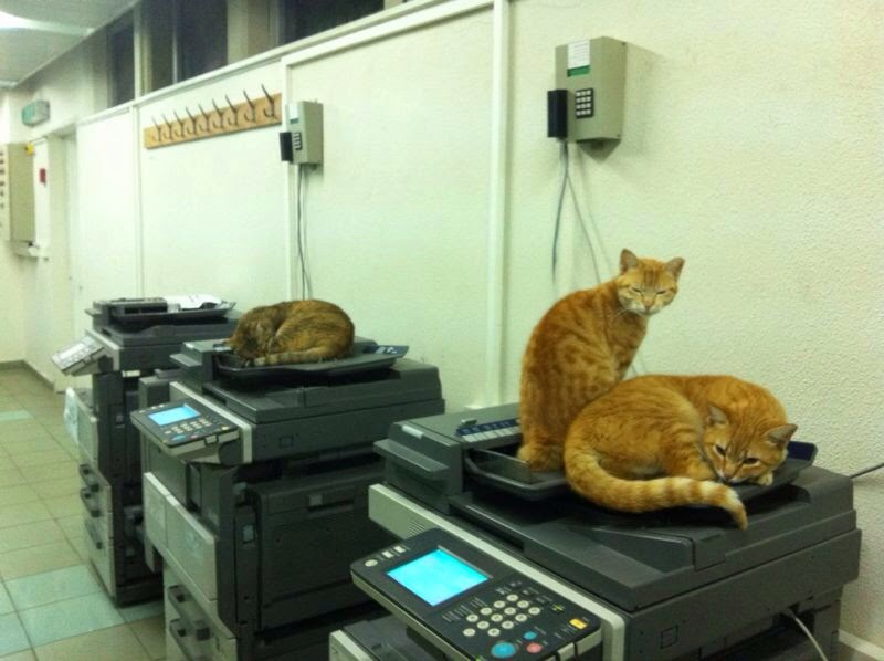 Funny cats - part 94 (40 pics + 10 gifs), cat pictures, cats sit on photocopiers