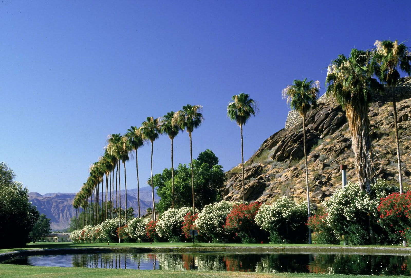 palm springs california We roll our eyes. But Bass' promotion   a contest to win a free official ...