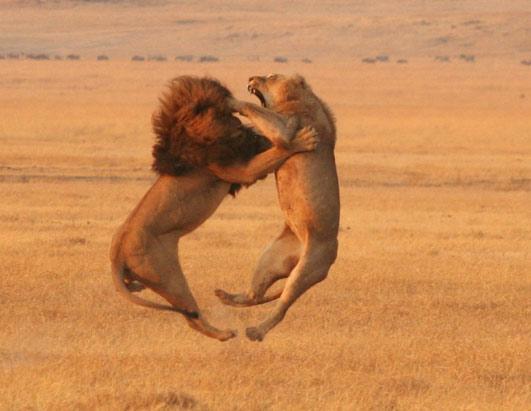 http://1.bp.blogspot.com/-zlu7GVCr0qI/TaQqxff9QEI/AAAAAAAAAHQ/qUOz62dgV7I/s1600/lions.jpg