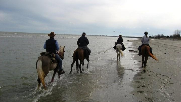 A cavallo nel parco del delta del po living ravenna - Bagno aloha marina romea ...