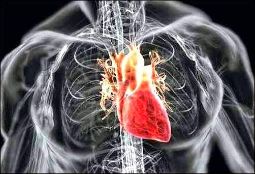 5 Pola Hidup Untuk Jantung Yang Lebih Sehat