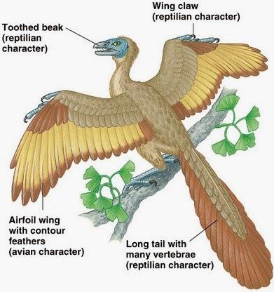 Asal-usul Evolusi Burung