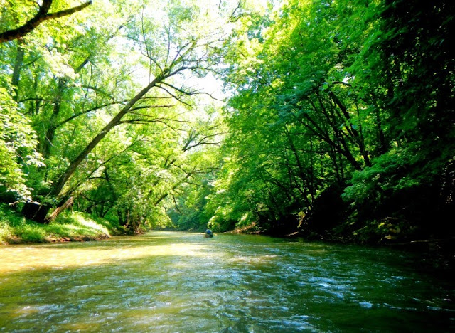 looking down the root river state water trail