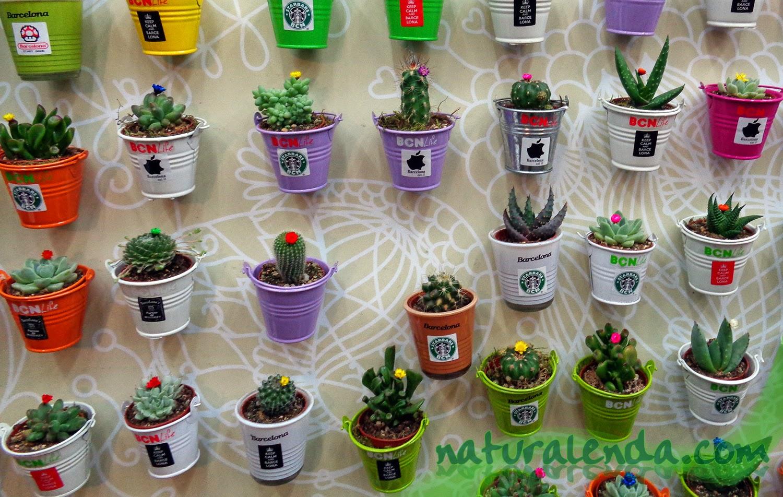 imanes con plantas