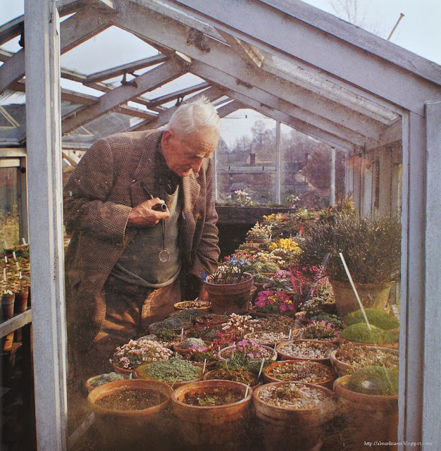 J. R. R. Tolkien in his Greenhouse
