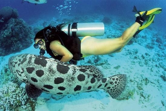 Cod Hole, Great Barrier Reef, Australia