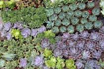 Urbanarbolismo » 10 formas de integrar la vegetación en arquitectura.