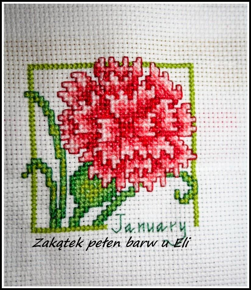 Kwiaty przez cały rok – kalendarzowy sal u Kasi