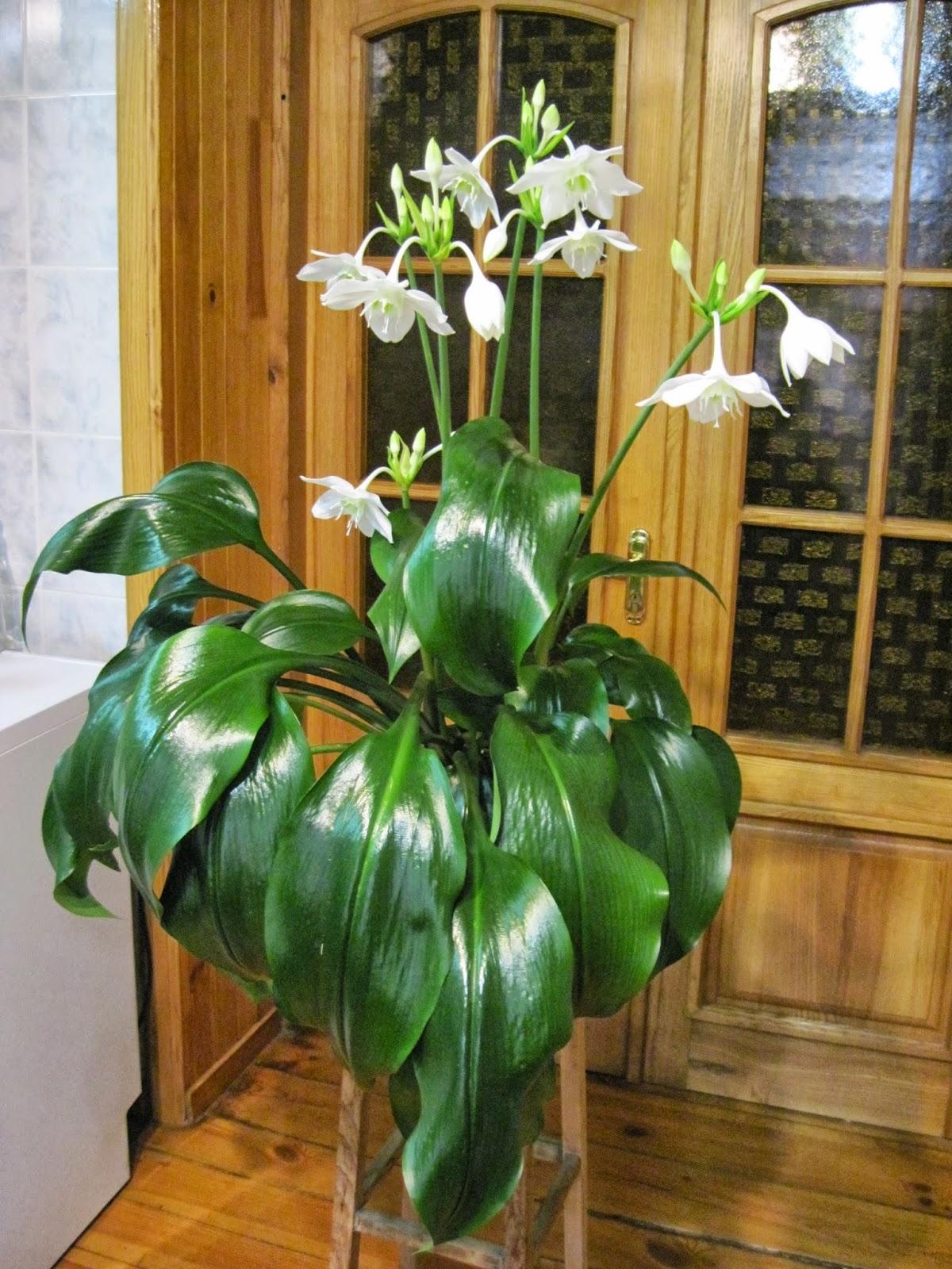 Домашние с белым цветком фото и названия уход