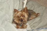 Our dog Gabby