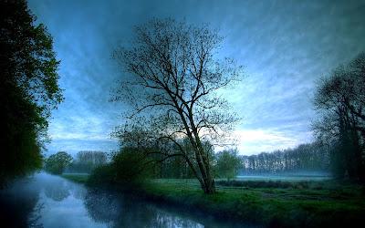 Gambar Pohon dan Kabut Indah