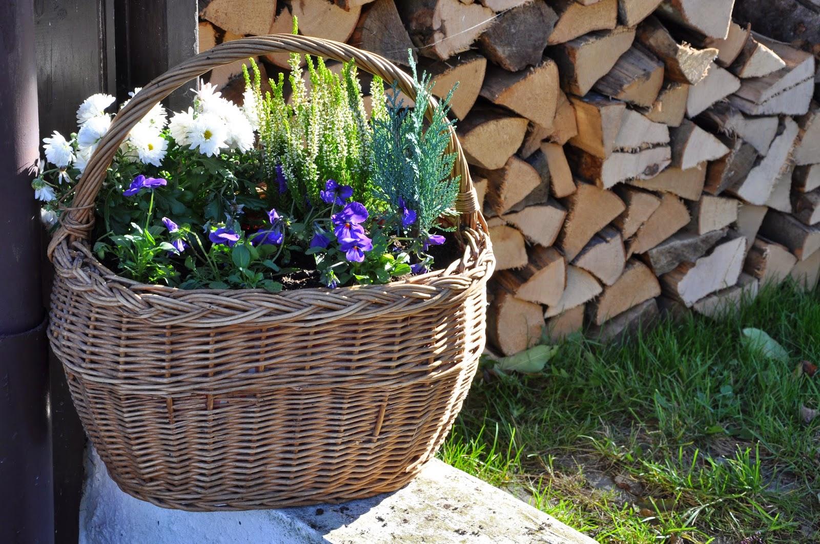 Herbst-Deko | Bepflanzter Einkaufskorb