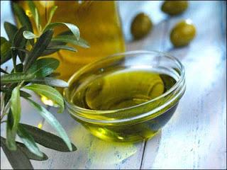 Olive oil | Olea europaea Oleaceae | Mediterranean Basin