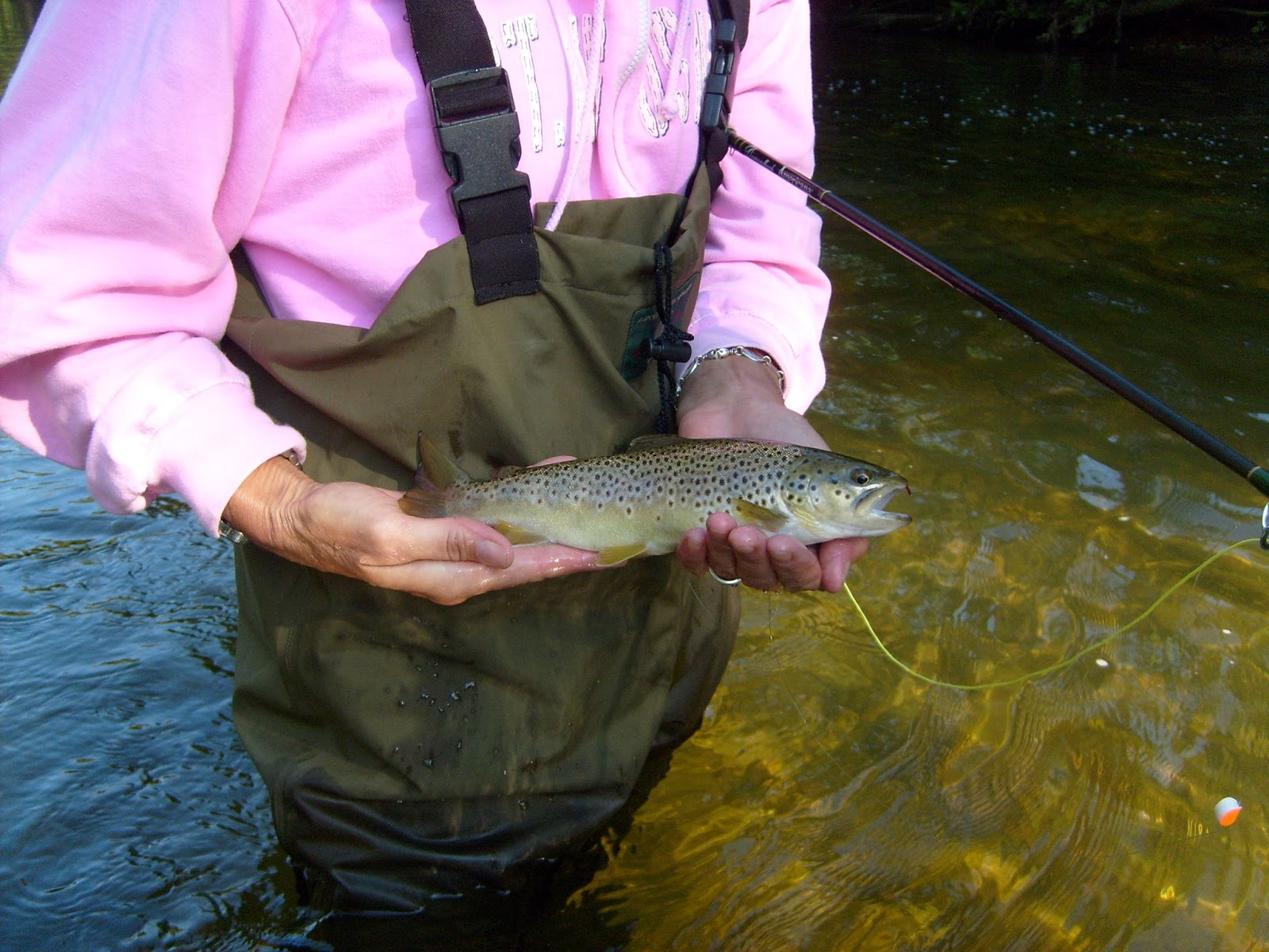 Vermont fly fishing think pink for Vermont trout fishing