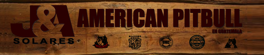 AMERICAN PITBULL EN GUATEMALA