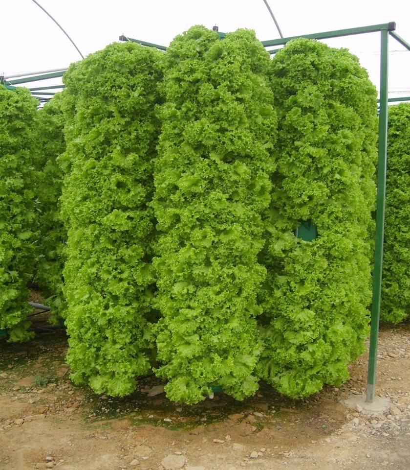 El blog de la naturaci n muros verdes y jardines verticales for Plantaciones verticales