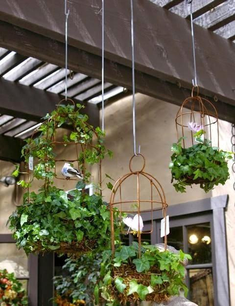 Roses plants garden dreaming gardens for Garden trees b q