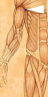 jian shu syracuse acupuncture benefits - photo#46