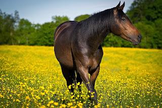 Caballo en campo de flores