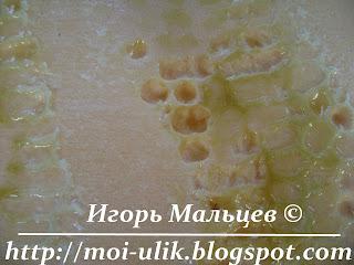 выгрызенные ячейки в пеноплексе