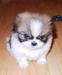funny mad dog