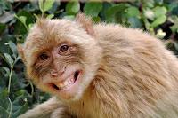 Não pague mico linkedIn