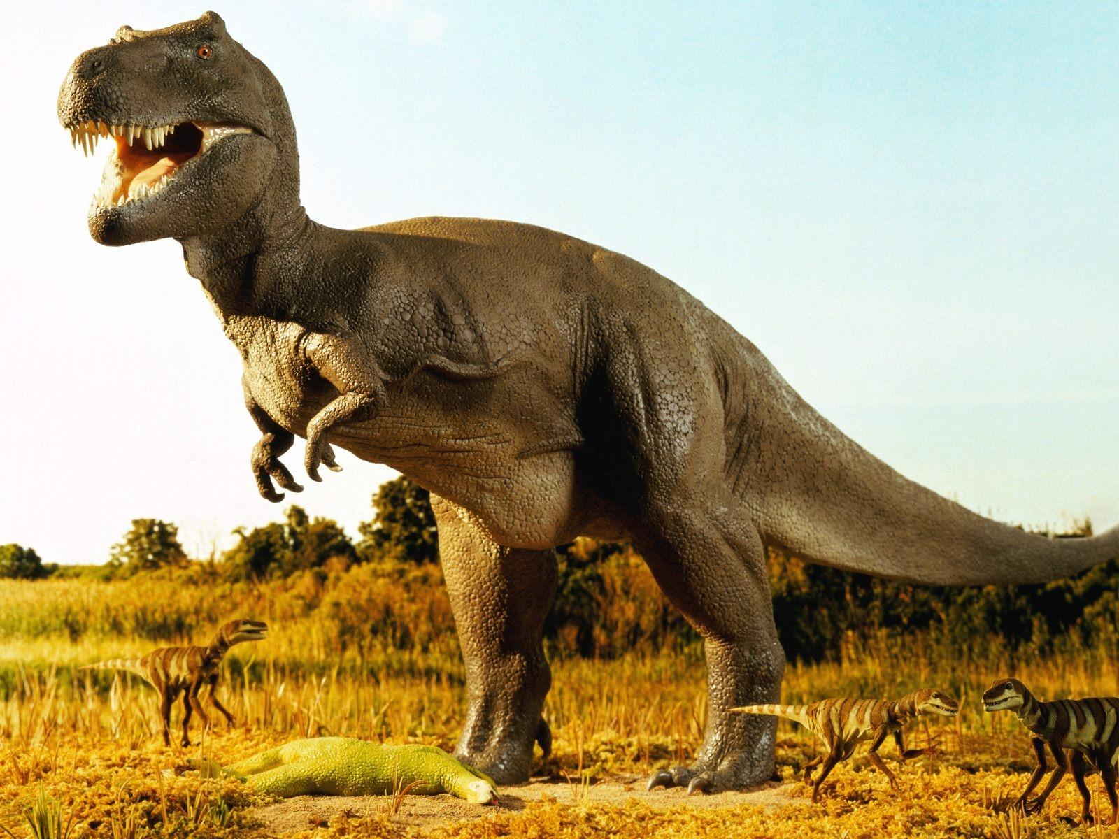 http://1.bp.blogspot.com/-zpISQWCvzdw/T6k0cd-plHI/AAAAAAAAB-A/BrvdNGVAKJY/s1600/dinosaurs-wallpaper-18.jpg