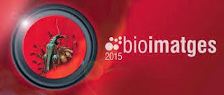 http://cbiolegs.cat/2015/05/11/bioimatges-2015/