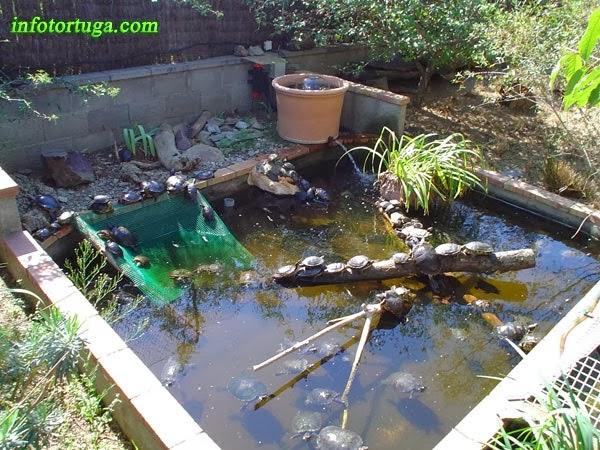 Un zoo en casa rampas para acuarios y estanques - Estanques de plastico ...