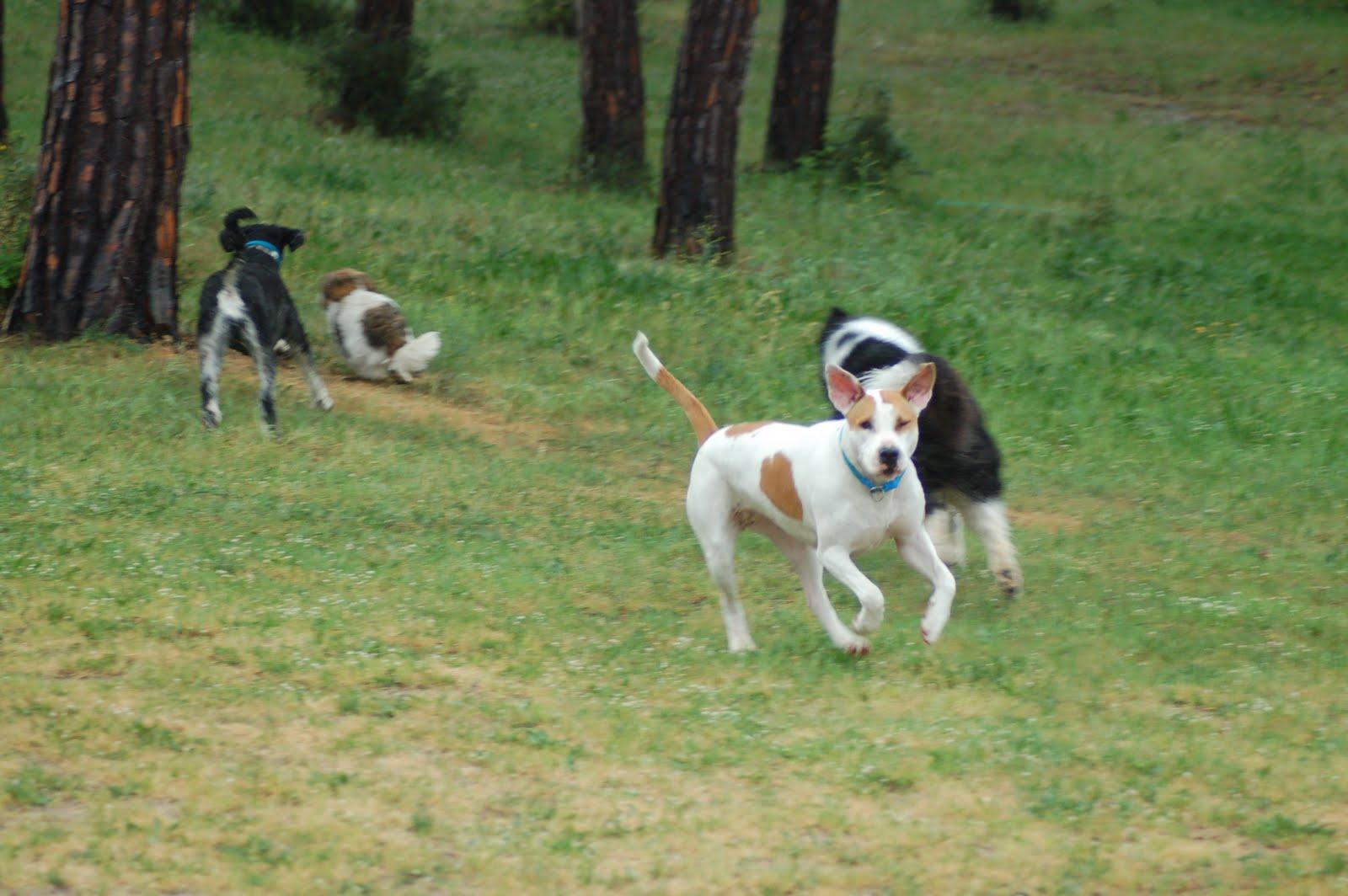 Coqui vega terapeuta natural y educador canino semana - El tiempo en vidreres ...