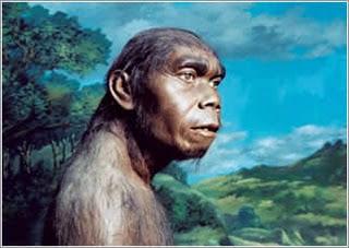 7 Penemuan Manusia Purba Di Indonesia