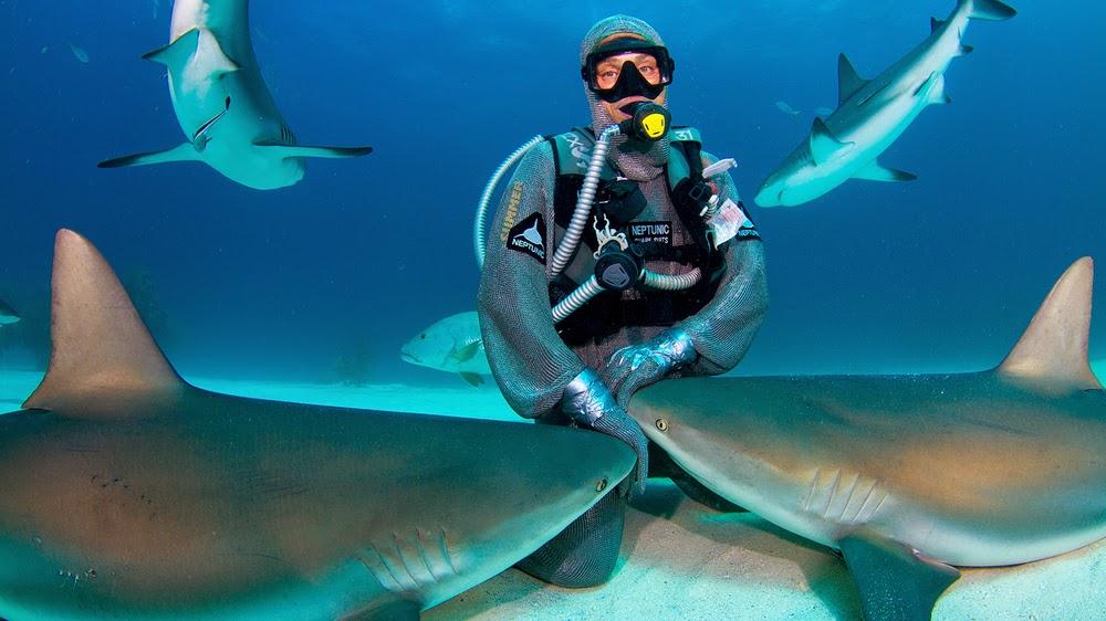 Cristina Zenato Beri Makan Ikan Jerung Tanpa Pakaian Perlindungan