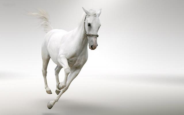 Fast running white horse