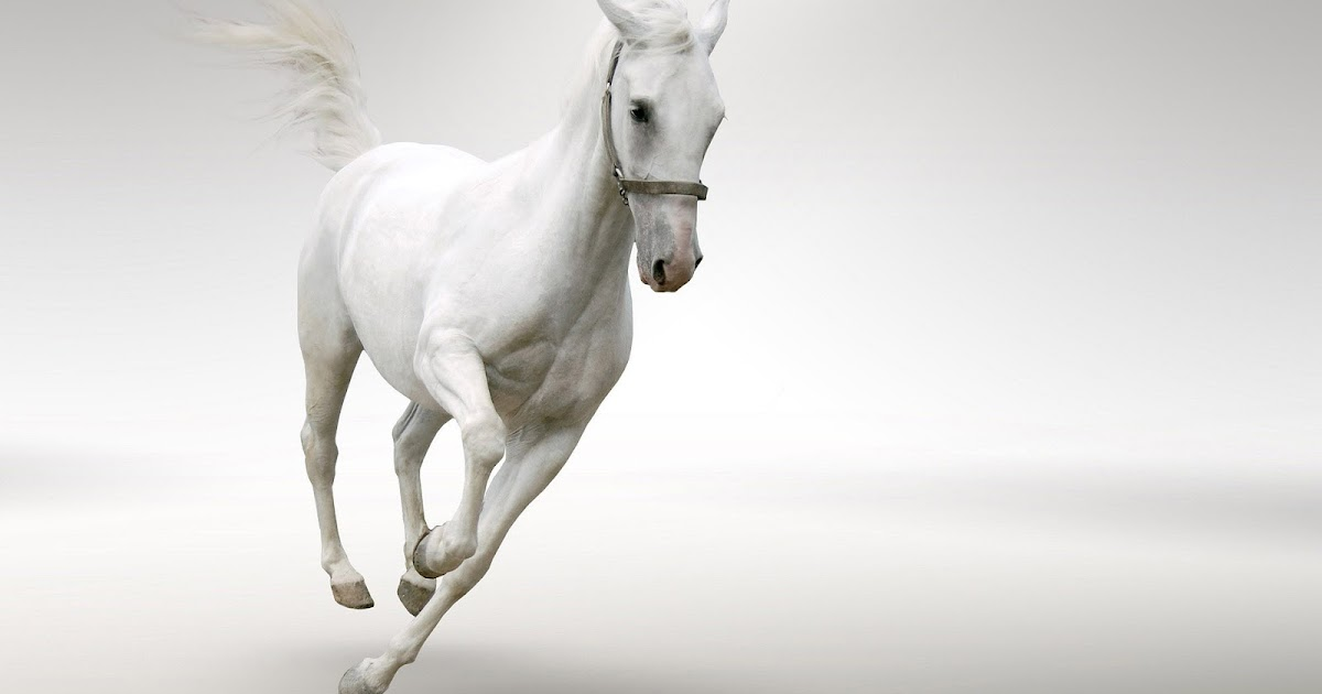 Fast Running White Horse Picture Hd Animals Wallpapers