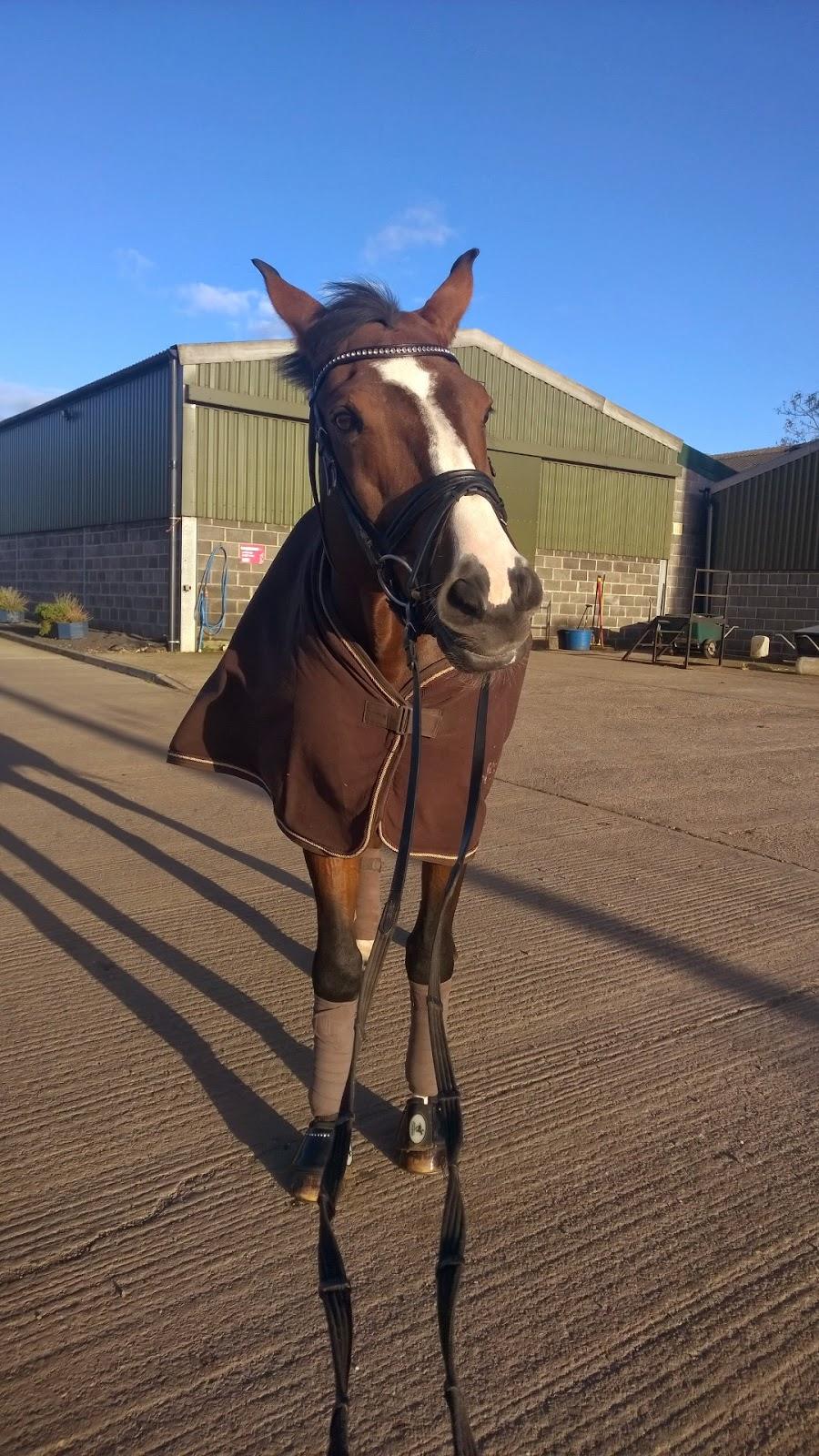 Roosa's Horsey Life: Withdrawal symptoms