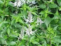 Herbal Untuk Atasi Virgit dengan Resep Tradisional