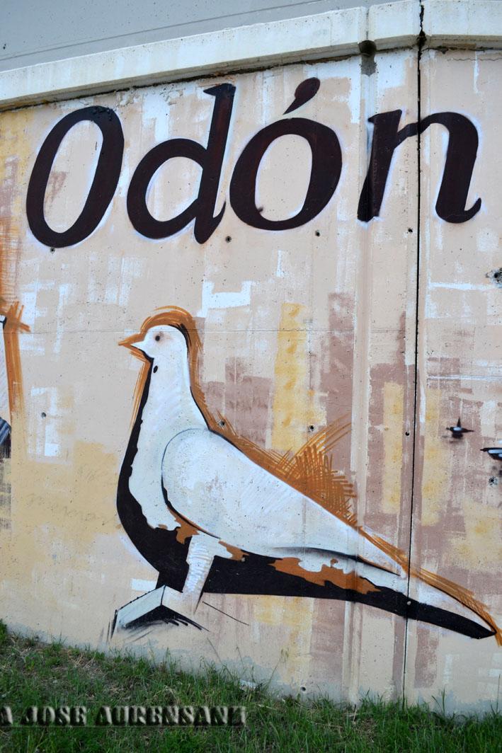La paloma símbolo de nuestro municipio Zuera fotografía realizada por Mj Aurensanz