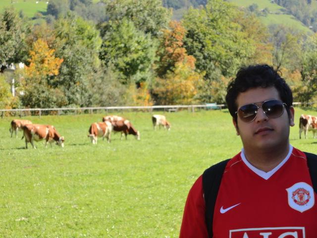 Meadows with Cows in Gasteiner Valley Austria