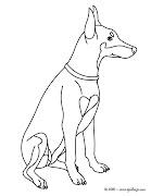 dibujos de doberman para colorear dog cpz hn