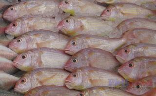 Bisugo - Philippine fish