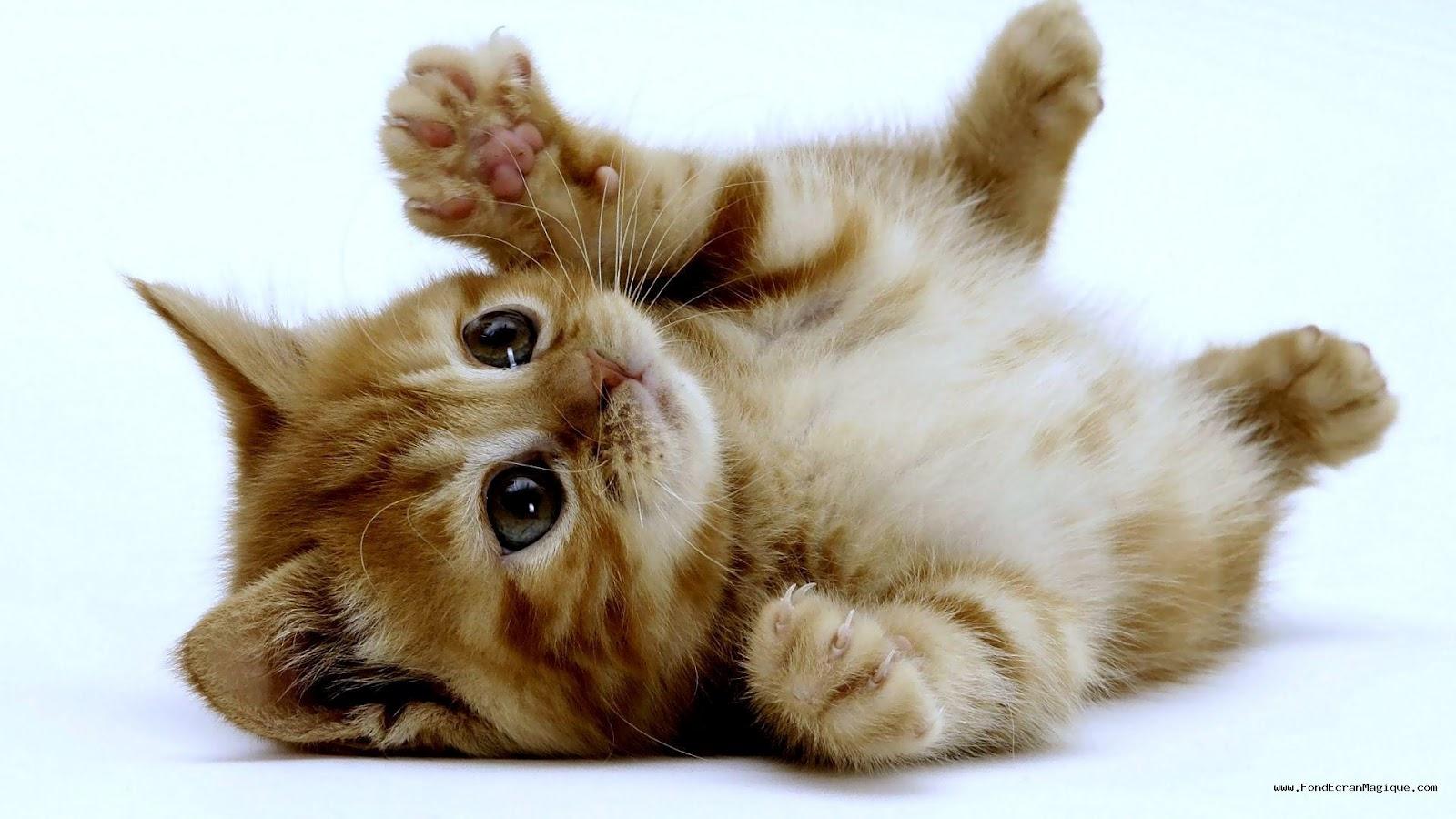 Les chatons trop gnon les animaux trop mignons - Photo chaton trop mignon ...