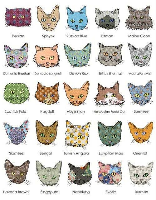Types Of Cats - Pictures
