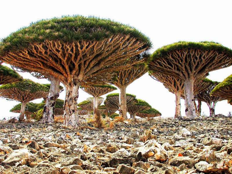 1. Socotra, Yemen - 11 Mindblowing Locations You Won't Believe Are Really on Earth
