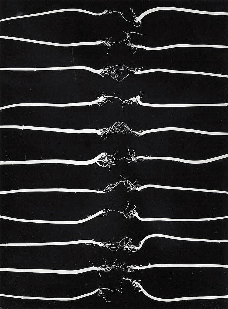 Broken, fotografia artística d'uns cordills horitzontals (com les cordes d'una guitarra, que o s'han trencat, desfilant-se, o estan a punt de fer-ho.