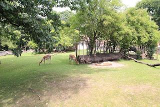 zoo w dreźnie zwierzęta